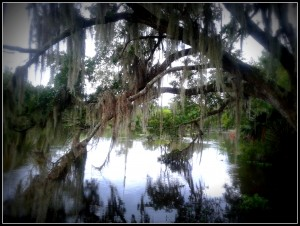 swamp-palude-new-orleans