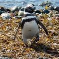 foto-pinguini-argentina